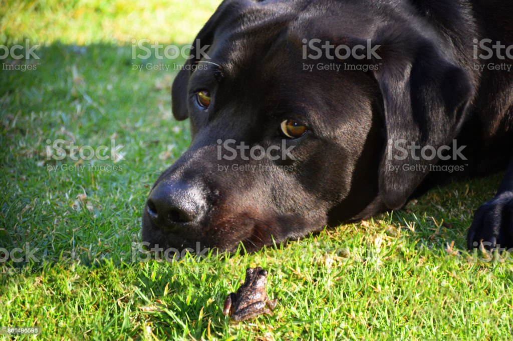 Frog and Dog stock photo
