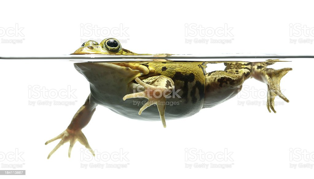 frog and water stock photo