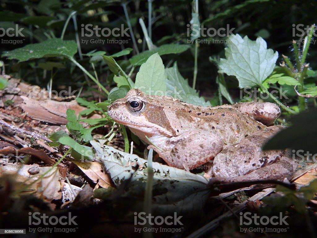 Frosch - braunen Pullover – Foto