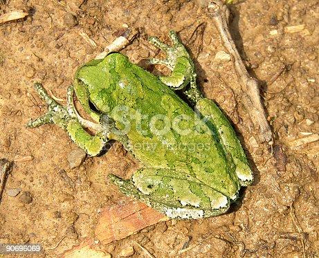 istock Frog Camo 90696069
