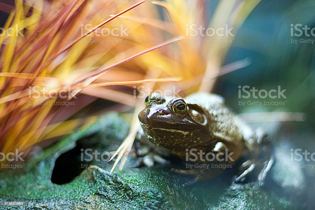 Frog chill stock photo