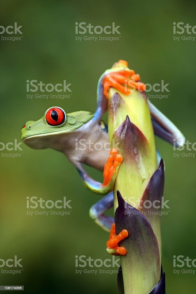 A frog clinging onto a stem leaf stock photo