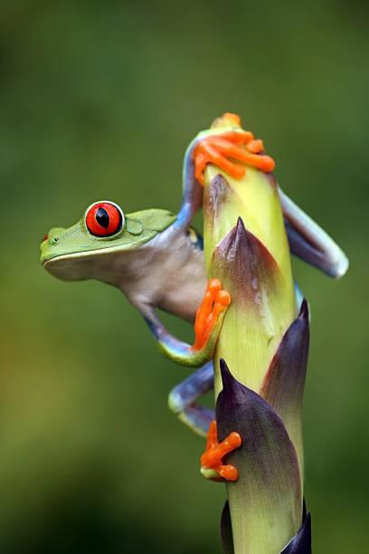 A frog clinging onto a stem leaf stock photo