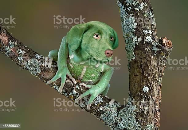 Frog dog picture id467899032?b=1&k=6&m=467899032&s=612x612&h=3oqpxa4lyr3zgerdzjzdwo7r sjwnli4zye6vdhitam=