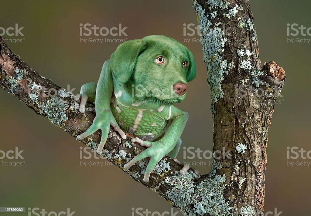 Frog Dog stock photo