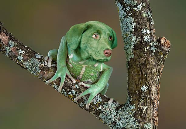 Frog Dog stock photo