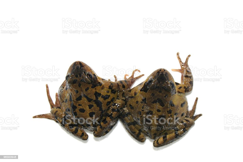 Frog Friends stock photo