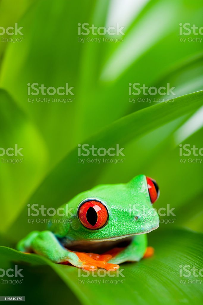 frog in a plant  close up royalty-free stock photo