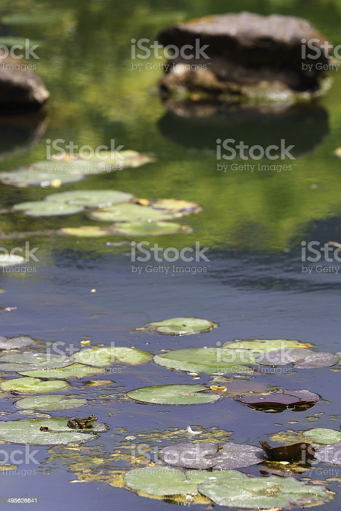 Frog in landscape stock photo