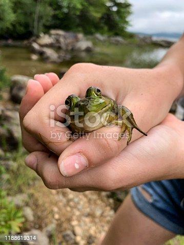A girl holds a bullfrog beside a lake
