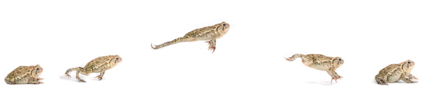 Frog Jumping Sequence