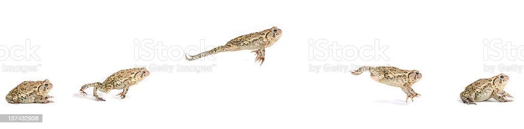 Frosch springen Sequence – Foto