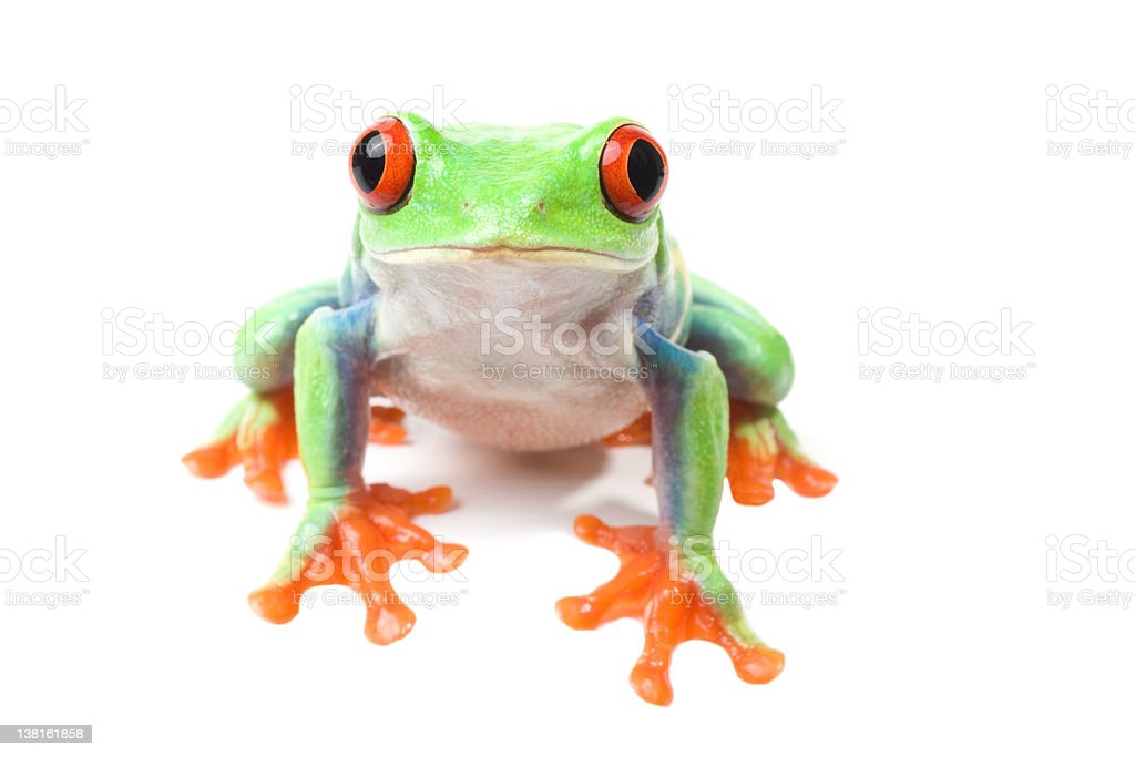 Frog looking curious isolated on white stock photo