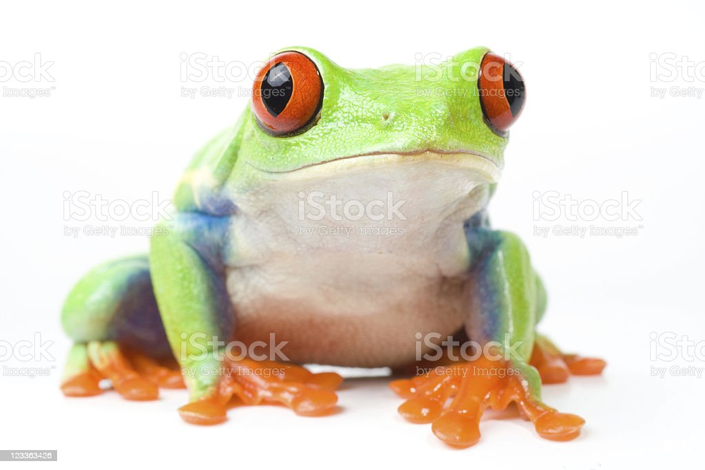 frog looking curious stock photo