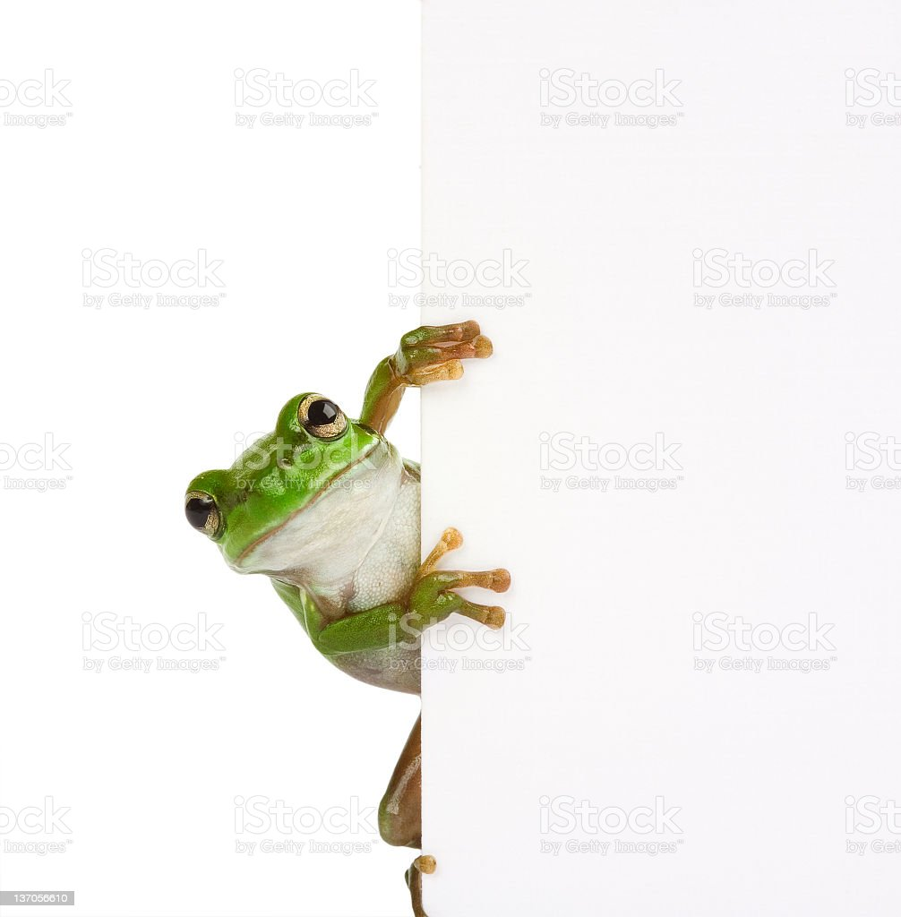 Frog message stock photo