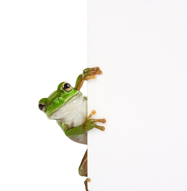 Grenouille message - Photo