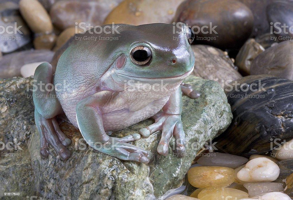 Frog near water stock photo