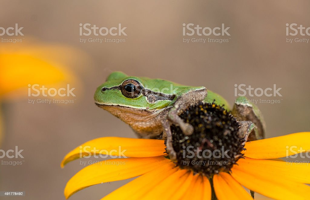 frog on a flower stock photo