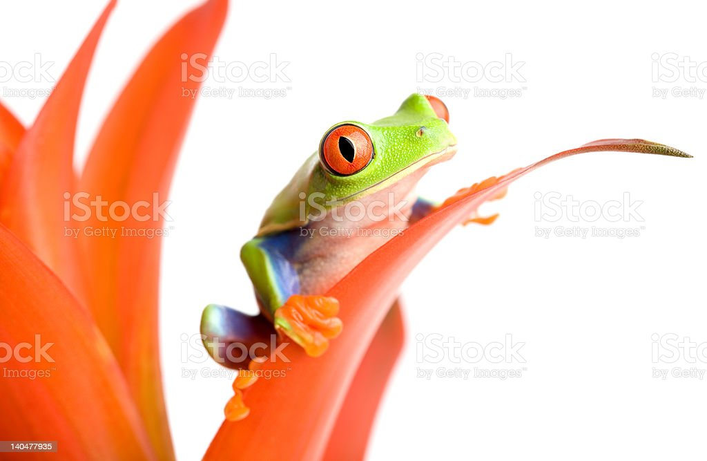 frog on a plant royalty-free stock photo