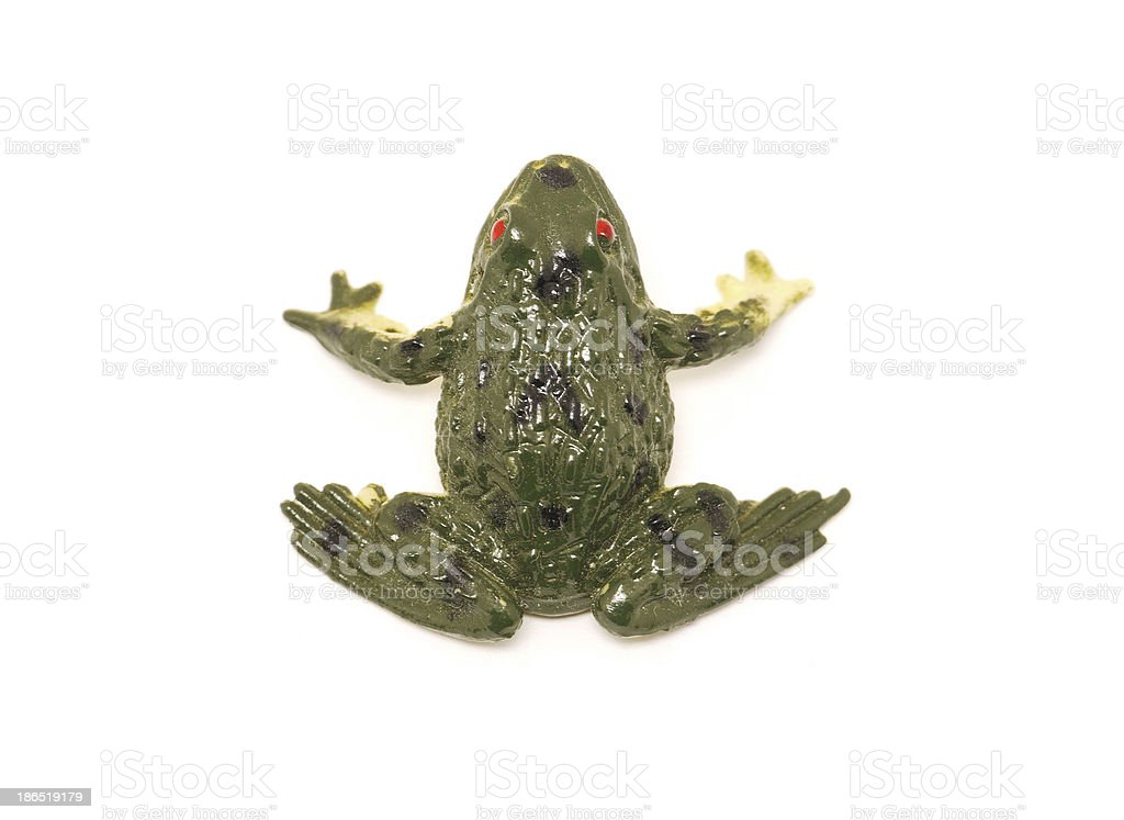 Frog on a white background royalty-free stock photo