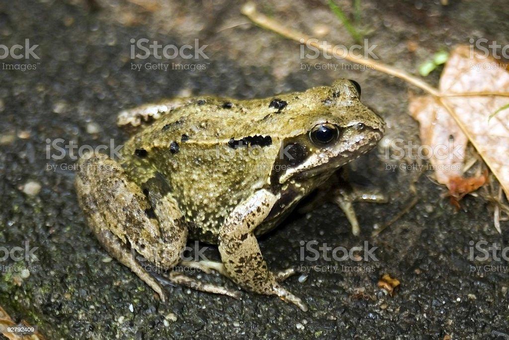 Frog on land stock photo
