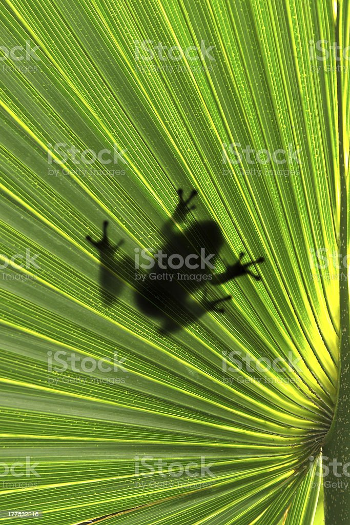 frog on leaf royalty-free stock photo