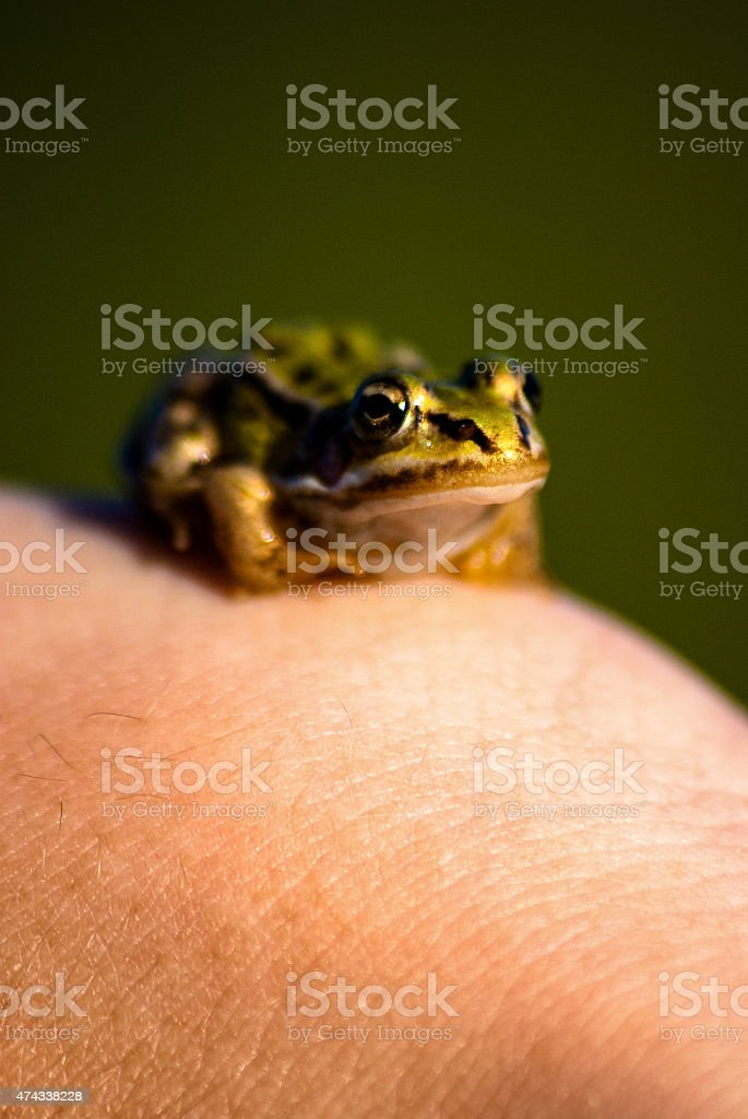 Frog on the arm stock photo