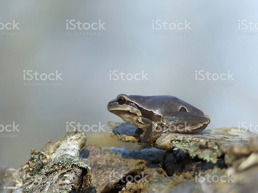 frog on tree bark stock photo