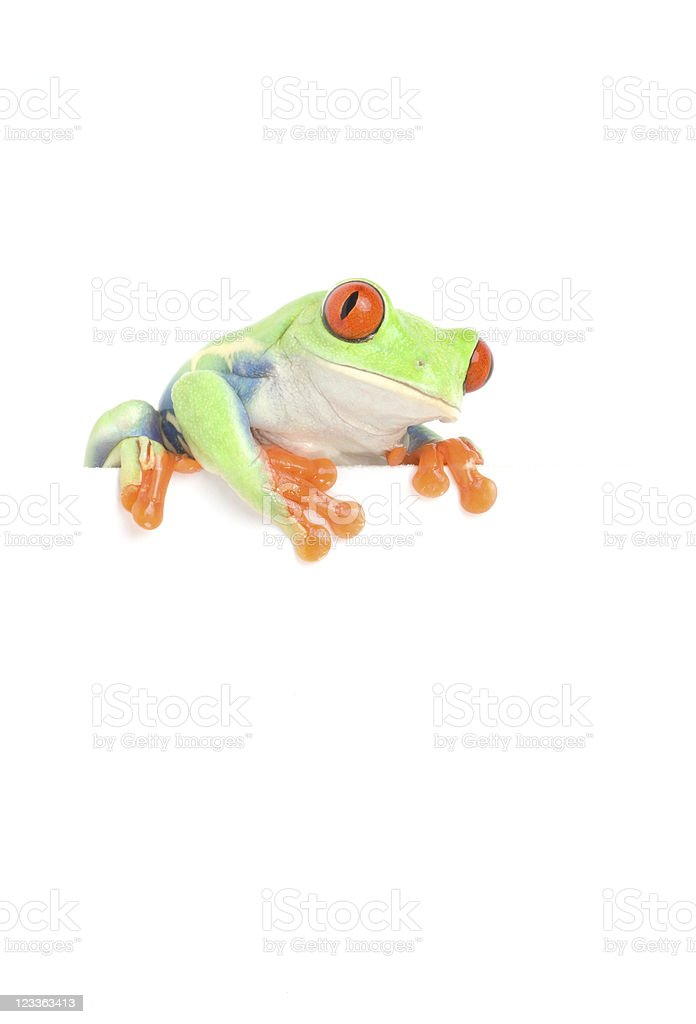 frog on white blank sign stock photo