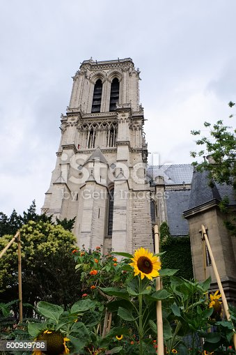 Looking at one of the Notre Dame towers and a surrounding garden with sun flowers, in frog perspective