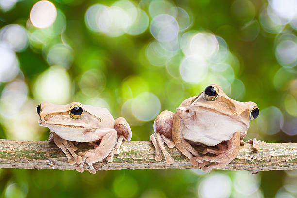 frog - croak stock pictures, royalty-free photos & images