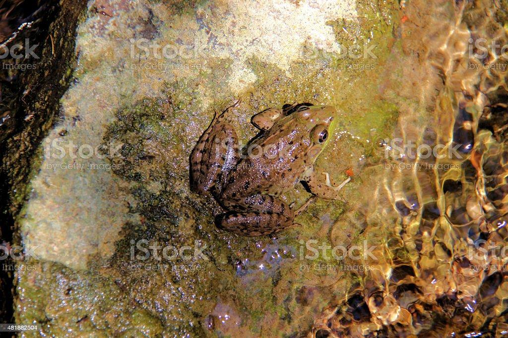 Frog – Foto