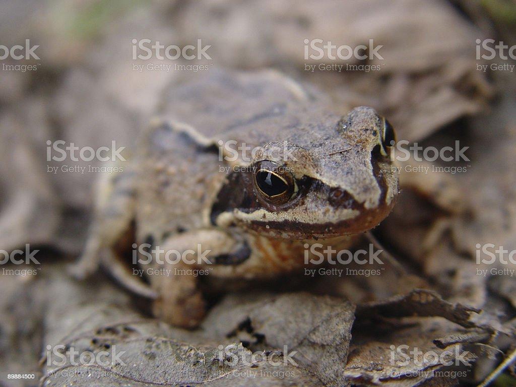 Лягушка Стоковые фото Стоковая фотография