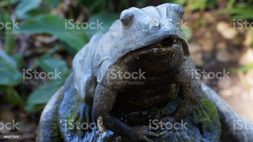 Frog royalty-free stock photo