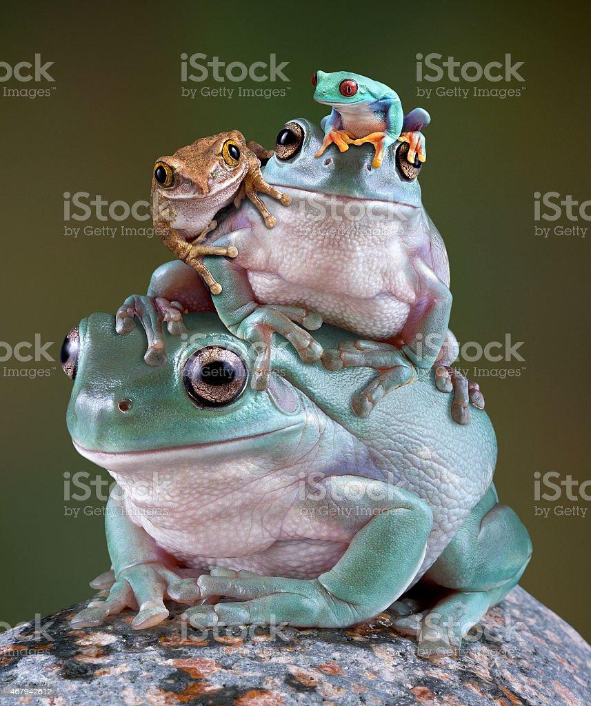 Frog Pile stock photo