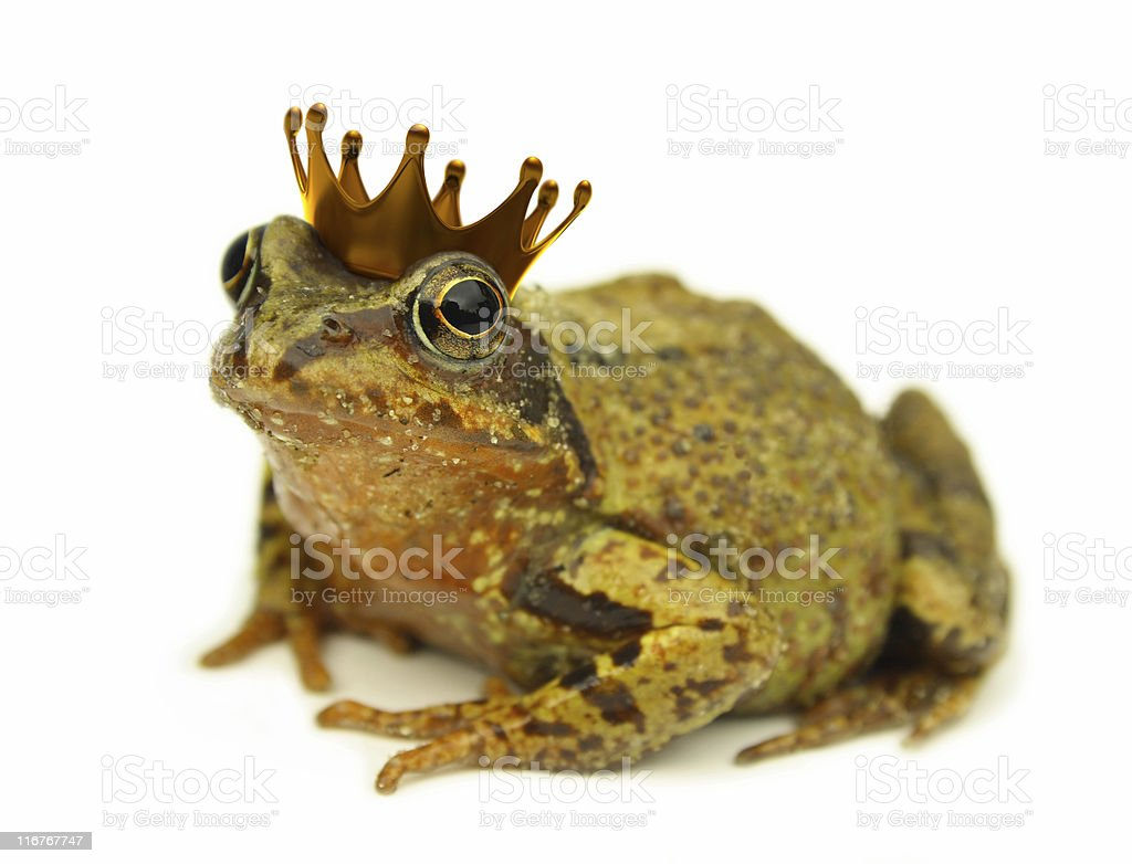 Frog Prince royalty-free stock photo