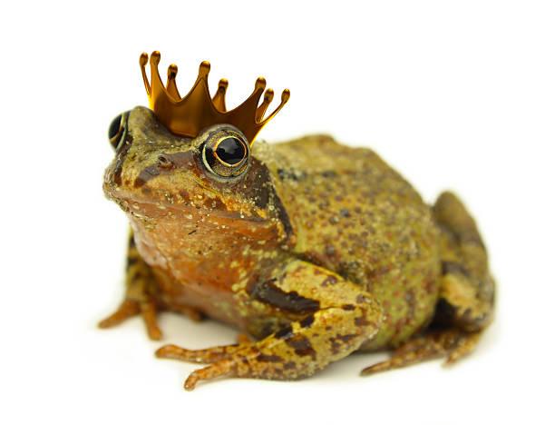 frog prince - prinzenkrone stock-fotos und bilder