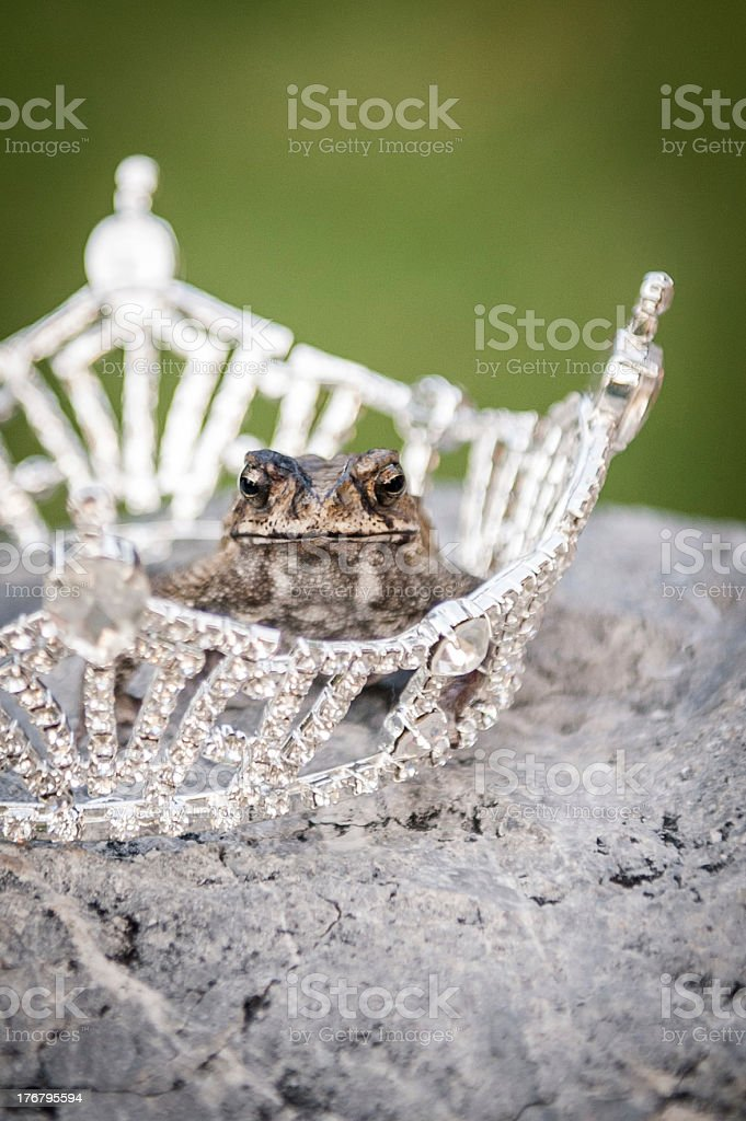 Frog Princess stock photo