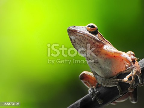 istock Frog resting on a branch 155373196