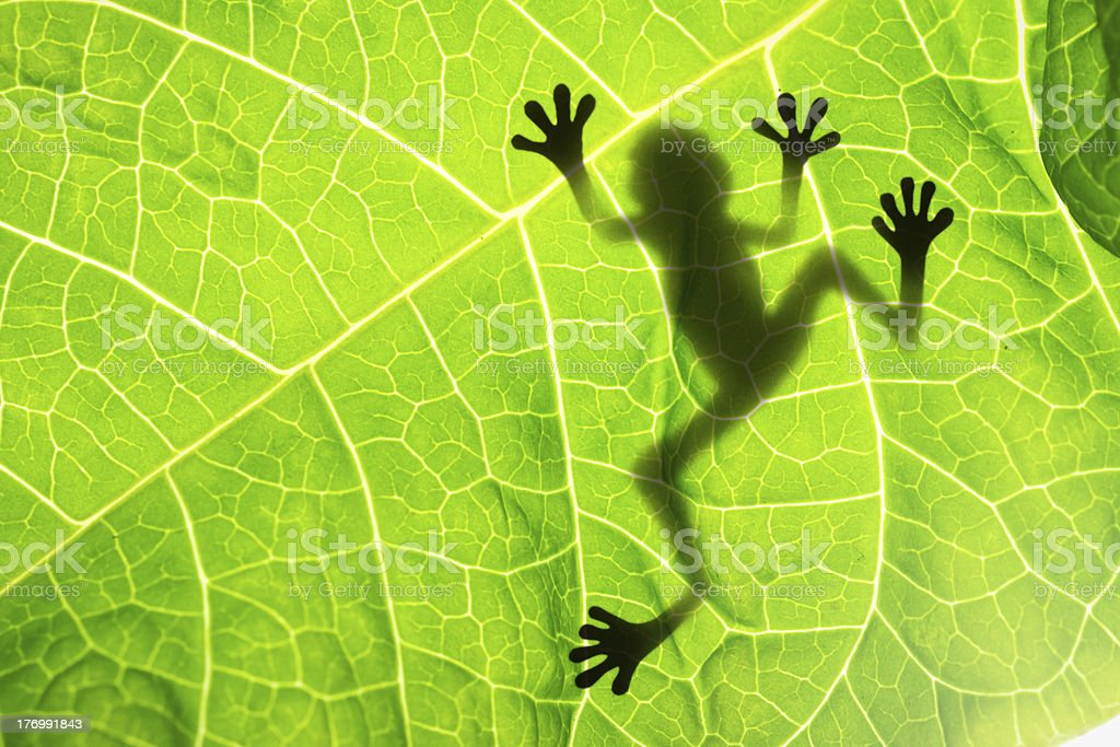 Frog shadow on the leaf stock photo