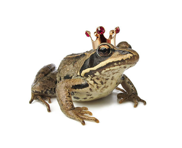 Frog wearing a crown against white background stock photo