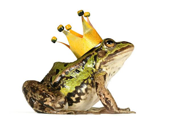 frosch mit krone - prinzenkrone stock-fotos und bilder