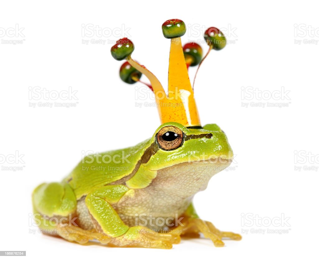frog with crown stock photo