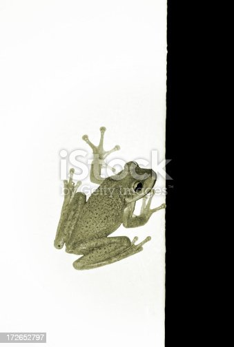 a frog on the wall