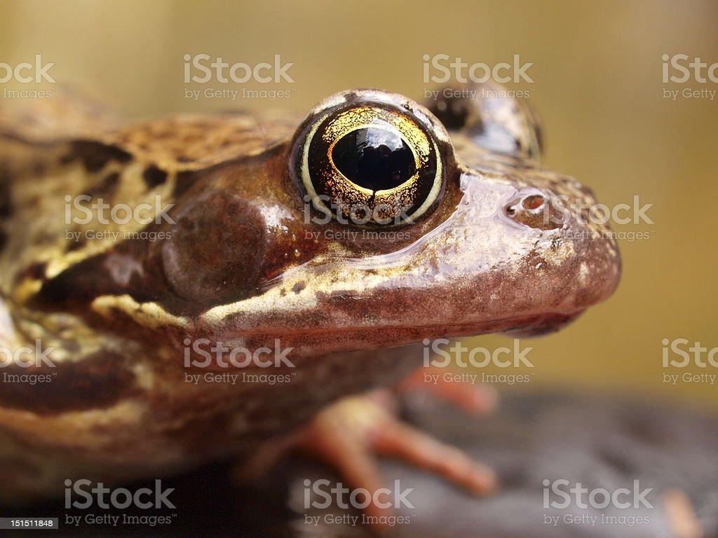 Frogger stock photo