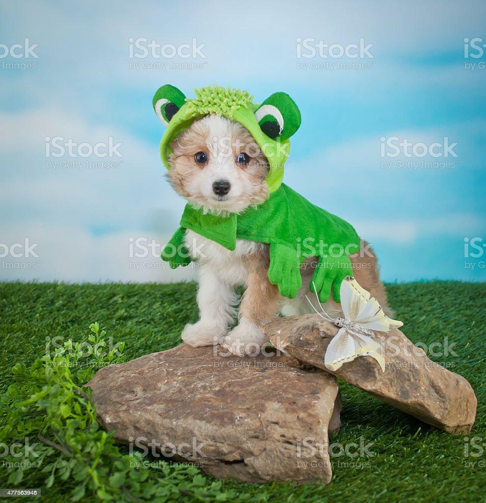 Frogger Puppy stock photo