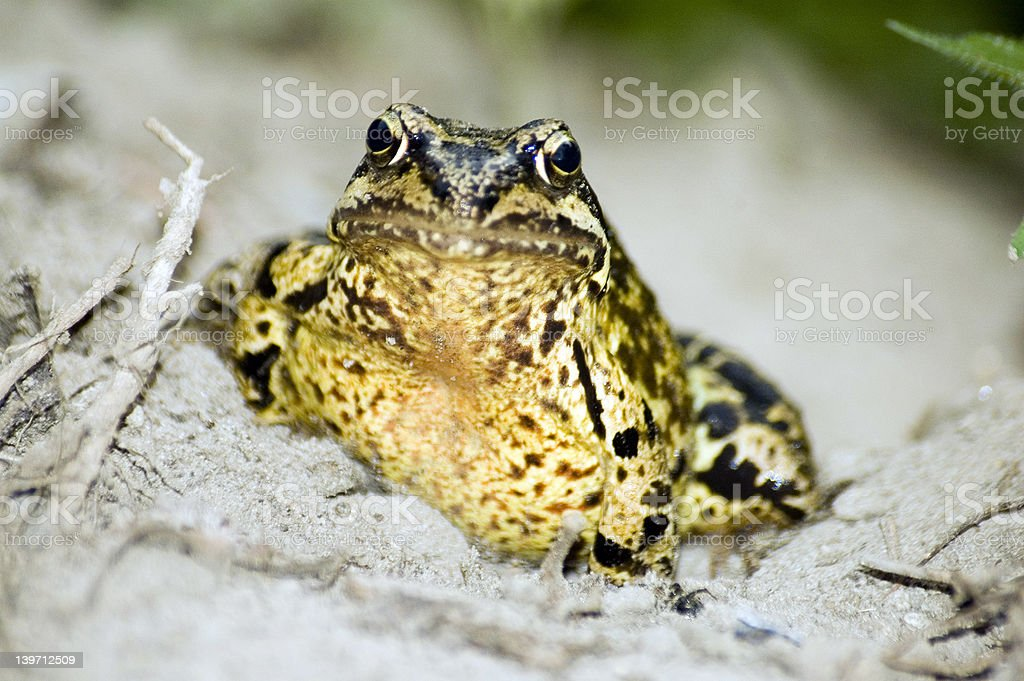 Froggy the frogger stock photo