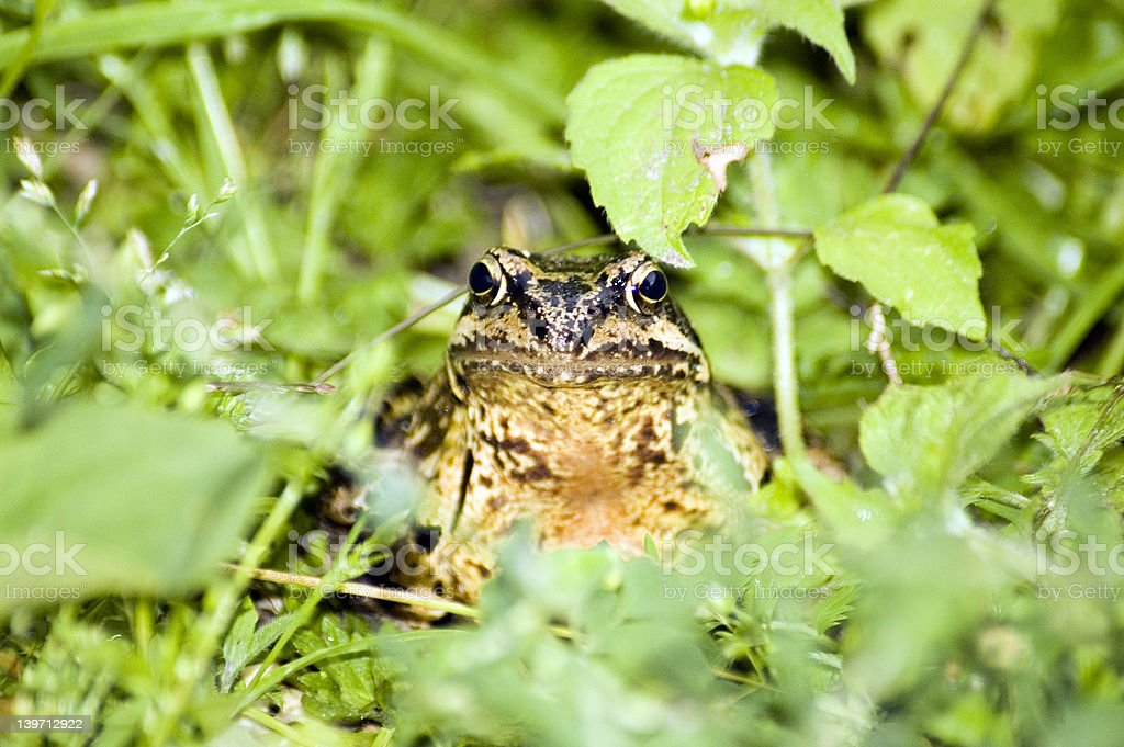 Froggy the frogger #2 stock photo