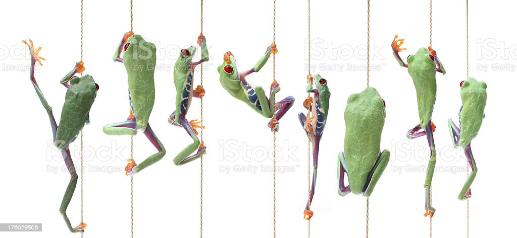 frogs climbing up stock photo