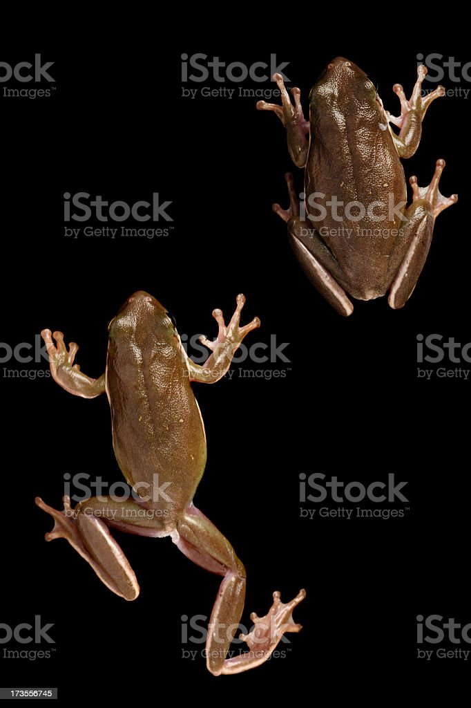 Frogs (clipping path) royalty-free stock photo